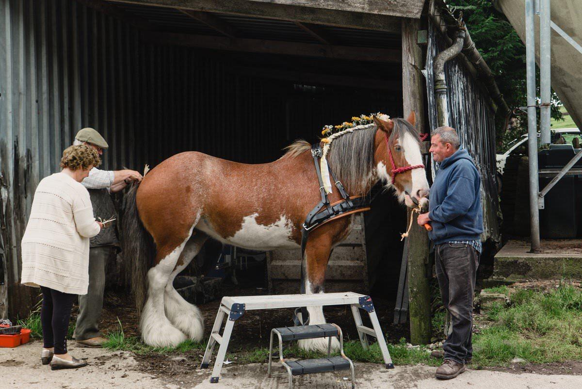 Elslack Wedding Farm Horse